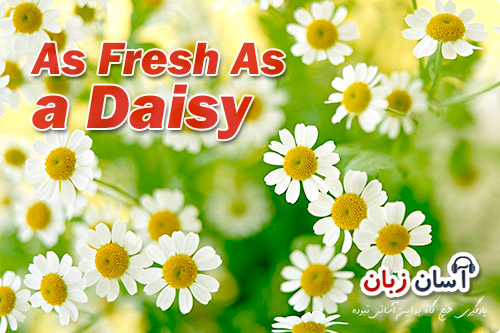 As Fresh As a Daisy